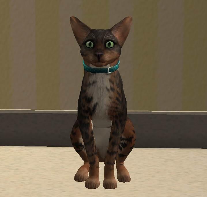 Crystal Arlington – Cat
